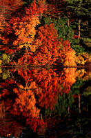 Barbers Pond Fall Foliage Reflections