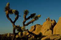 Joshua Tree Jumbo Rocks