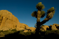 Joshua Tree Jumbo Rocks 2