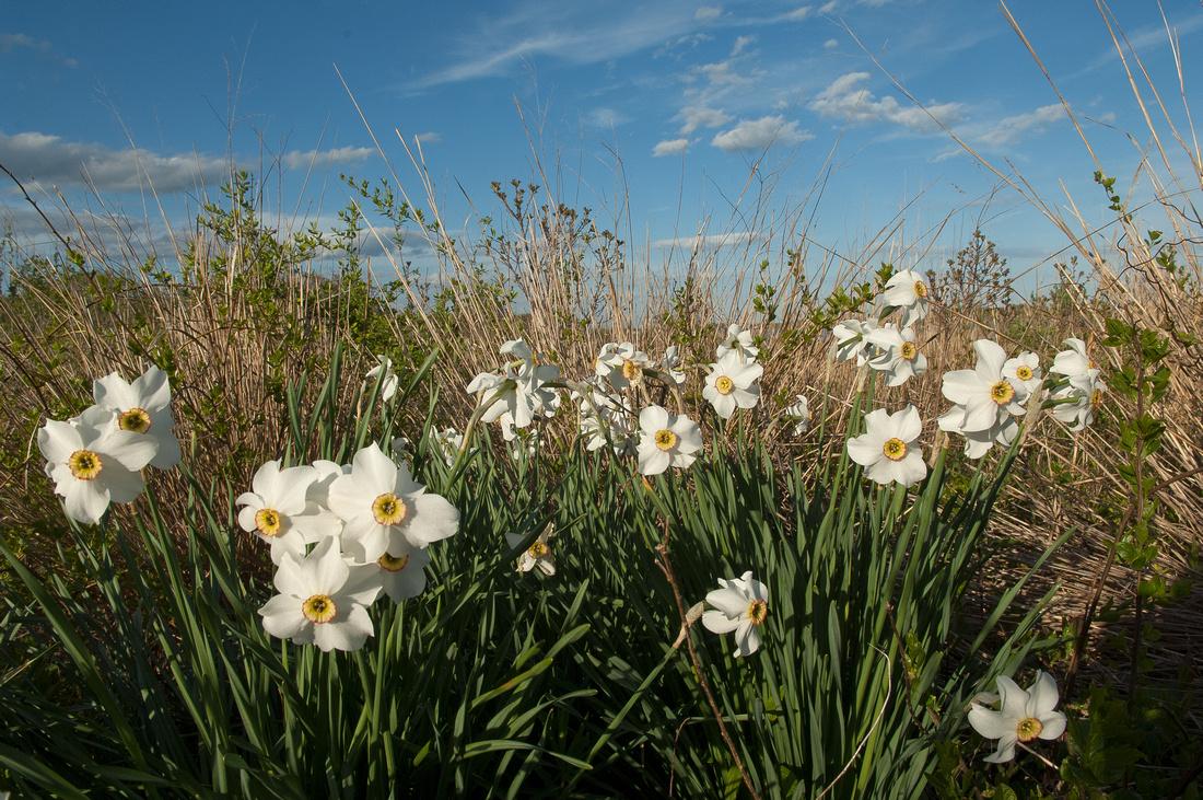 Wildflowers Nature Trail Ninigret National Wildlife Refuge